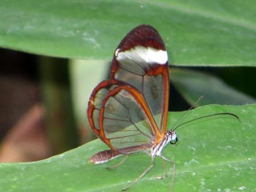 11 ... papillons.JPG