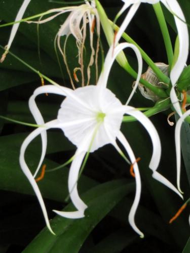 10 National botanic garden fleurs et ....JPG
