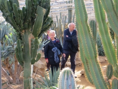 Cactuseraie de Creismeas à Guipavas.JPG